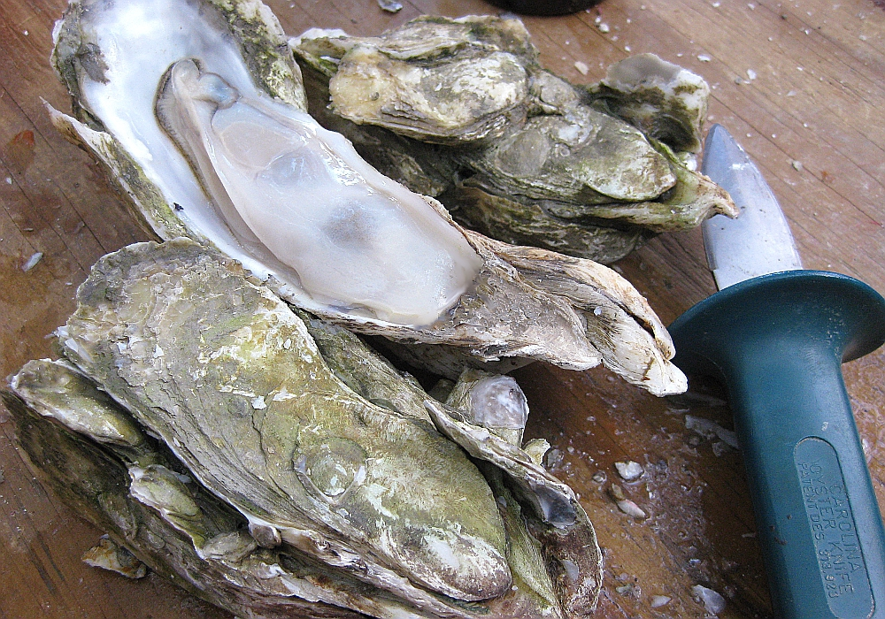 How To Do a North Carolina Oyster Roast - Wilmington NC - coastalnc ...